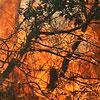 آتشسوزی جنگلها یكی از علل تولید گازهای گلخانهای است